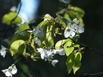 Gegenlicht, Blüte, Frühling, Schatten