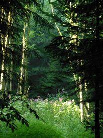 Wald, Licht, Lichtung, Fotografie