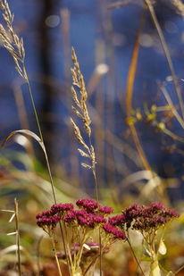 Magenta, Vergilben, Gras, Himmelblau