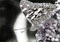 Schmetterling, Lila, Blüte, Fotografie