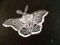 Zeichenkohle, Natur, Zeichnung, Motte
