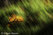 Herbst, Braun, Fortbewegung, Fallen