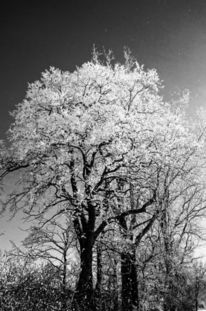 Und bitter, Winter ist´s, Kalt ii, Fotografie