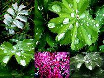 Pflanzen, Tropfen, Fotografie, Regen