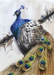 Pfau, Aquarellmalerei, Tiere, Vogel