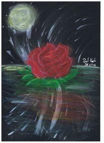 Rose, Mond, Rot schwarz, Blumen