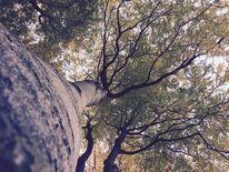 Himmel, Baum, Fantasie, Abbild