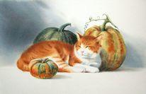 Kürbisse, Herbst, Tiere, Kater