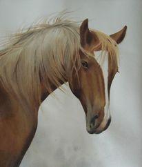 Natur, Pferde, Tiere, Aquarell