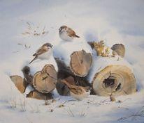 Winter, Schnee, Vogel, Spatz