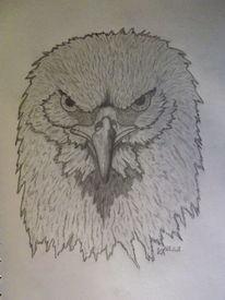 Vogel, Zeichnung, Schwarz weiß, Adler