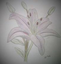 Blumen, Zeichnung, Lilie, Zeichnungen