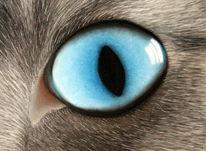 Katzenaugen, Kreide, Katze, Blau