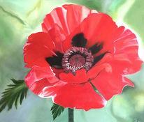 Mohnblüten, Rot, Ölmalerei, Malerei