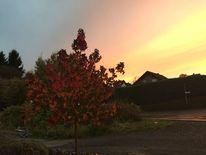 Herbst, Regenbogenfarben, Himmel, Fotografie