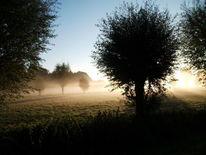 Natur, Licht, Nebel, Fotografie