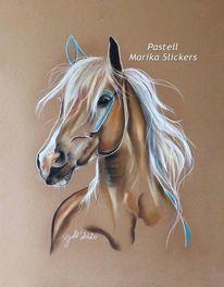 Tierportrait, Haflinger, Arbeitspferd, Pferdeliebe