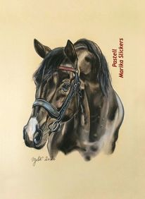 Niederländisches warmblutpferd, Pferde, Sport, Dressurpferd