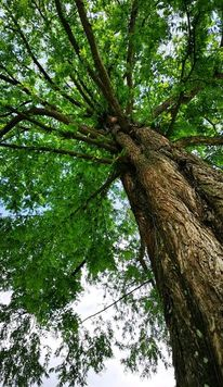 Natur, Pflanzen, Baum, Fotografie