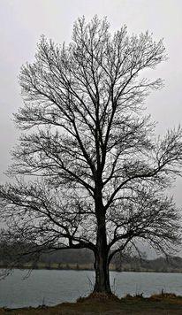 Baum, Natur, Wasser, Fotografie