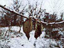 Blätter, Schnee, Natur, Fotografie