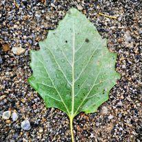 Natur, Pflanzen, Blätter, Fotografie