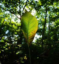 Natur, Wald, Blätter, Fotografie