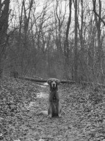 Tiere, Wald, Hund, Fotografie