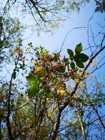 Blätter, Baum, Pflanzen, Natur