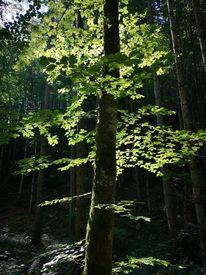 Liebe, Wald, Baum, Natur