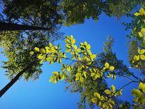 Baum, Natur, Pflanzen, Fotografie
