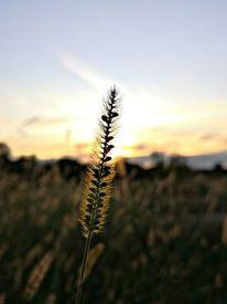 Natur, Pflanzen, Feld, Fotografie
