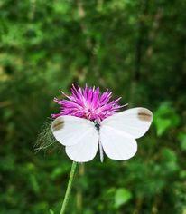 Natur, Pflanzen, Schmetterling, Fotografie