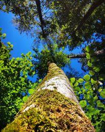 Pflanzen, Natur, Baum, Fotografie