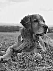 Hund, Tiere, Natur, Fotografie