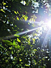 Wald, Natur, Leben, Fotografie