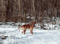 Wald, Schnee, Hund, Natur