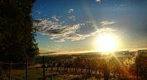 Sonne, Natur, Steiermark, Fotografie