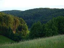 Natur, Baum, Steiermark, Sonne