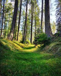 Wald, Natur, Baum, Fotografie