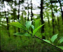 Natur, Pflanzen, Wald, Fotografie
