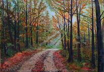 Wald, Herbst, Sonne, Weg