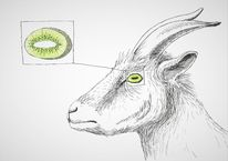 Ziegen, Kiwi, Augen, Zeichnungen