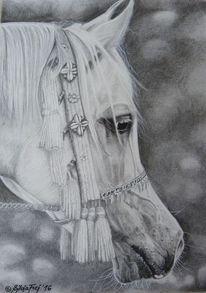 Kohlezeichnung, Arabisches pferd, Bleistiftzeichnung, Grafit