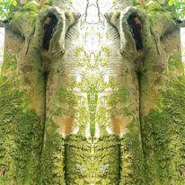 Magische natur, Fotografie, Beseelter baum, Landschaft