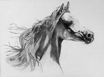 Pferdekopf, Aquarellmalerei, Araber, Im profil