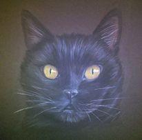 Pastellmalerei, Katze, Tierportrait, Zeichnungen