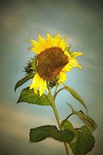 Sonnenblumen, Verfremden, Farben, Gemälde