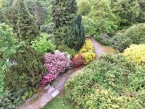 Natur, Landschaft, Rhododendron, Baum