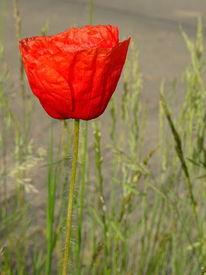 Blumen, Grün, Rot, Natur